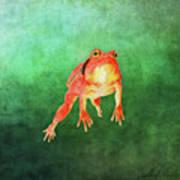 Tomato Frog Poster