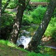 Toms Creek In Summer 3 Poster