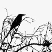 Top Bird Poster