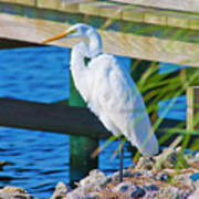 Topsail Egret Poster