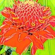 Torch Ginger Aloha Poster