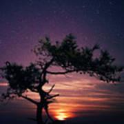 Torrey Pines Twinkle Twinkle Poster