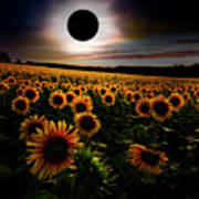 Total Eclipse Over The Sunflower Field Poster