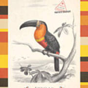 Toucan Bird Responsible Travel Art Poster