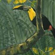 Toucan In Jungle Poster
