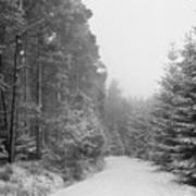 Track, Winter, Slaley Woods Poster