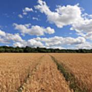 Tracks Through Wheat Field Poster