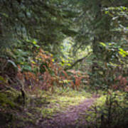 Trail In The Forest Poster