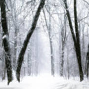 Trail Through The Winter Forest Poster