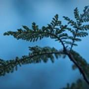 Trailside Foliage Poster