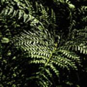 Tranquil Botanical Ferns Poster