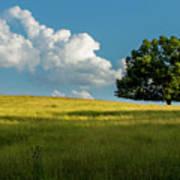 Tranquil Solitude Billowing Clouds Oak Tree Field Art Poster