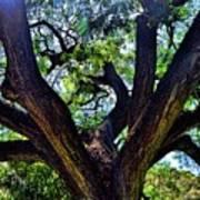 Tree 105 Poster