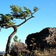 Tree And Rock Poster