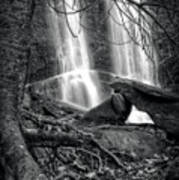 Tree At Falls In Black And White Poster