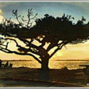 Tree At Vacation Island Poster