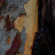 Tree Bark Collection # 52 Poster