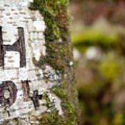 Tree Bark Graffiti - H 04 Poster
