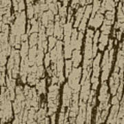 Tree Bark Texture Brown Poster