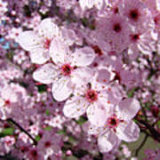 Tree Blossoms Pink Spring Flowering Trees Baslee Troutman Poster