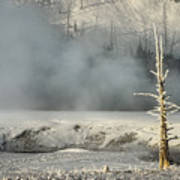Tree By The Thermal - Yellowstone Poster