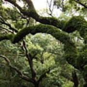 Tree Drama Poster