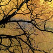 Tree Fantasy 7 Poster
