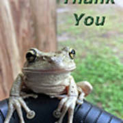 Tree Frog Thank You Poster