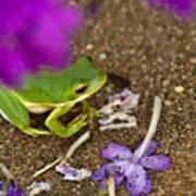 Tree Frog Under Flower Poster