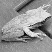 Tree Frog Up Late Poster