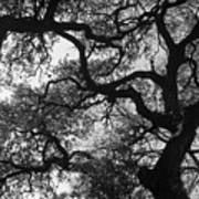 Tree Gazing Poster