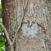Tree Heart Poster