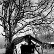 Tree-hut Poster