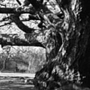 Tree I Poster
