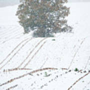 Tree In Cornfield 7543 Poster