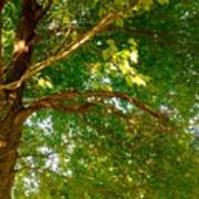 Tree In Late Summer Poster