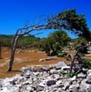 Tree In Tulum Poster