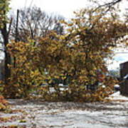 Tree Meets Hurricane Sandy By The Fair Lawn Nj Post Office Poster