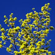 Tree Next Door Ae 3 Poster