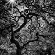 Tree Noir Poster