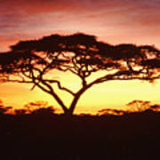 Tree Of Life Africa Poster