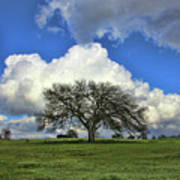 Tree Of Life Style Oak Tree And Coluds Poster