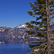 Tree Over Crater Lake Poster