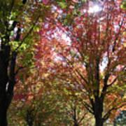 Tree Pathway Poster