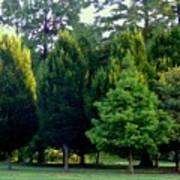 Tree Personalities Poster