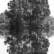 Tree Reflection In Black And White Poster