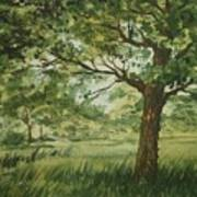 Tree Shadows Poster