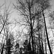 Tree Silhouette II Bw Poster