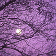 Tree Silhouettes With Rising Moon In Cades Cove, Great Smoky Mountains National Park, Tennessee, Usa Poster
