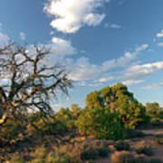 Tree Sky Utah Poster